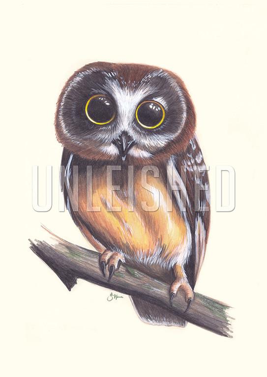 owl pencil_WM_SM.jpg