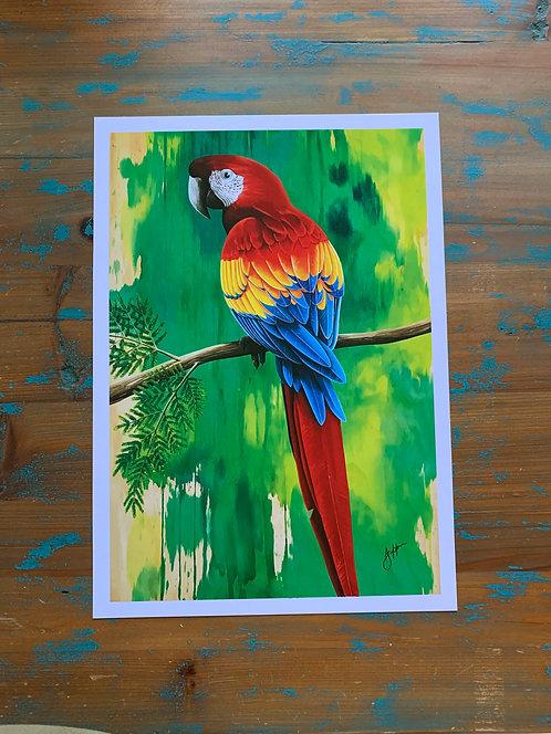 'Scarlett' Macaw print