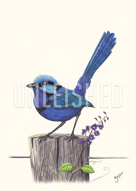 Wren pencil illustration print