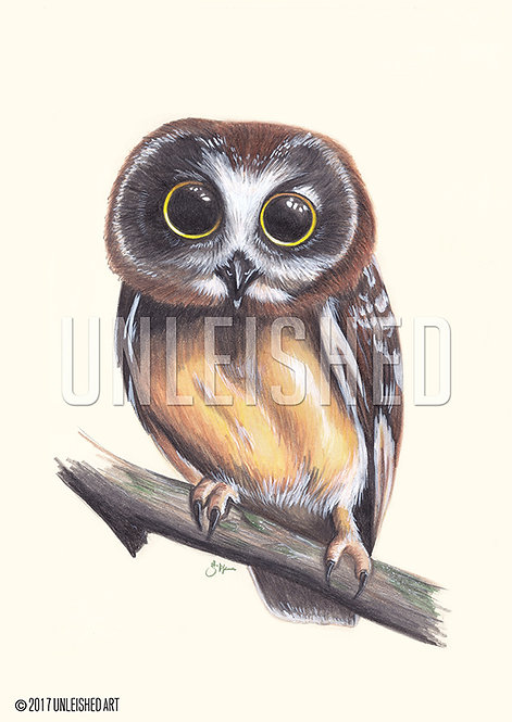 Owl pencil illustration print (A3)