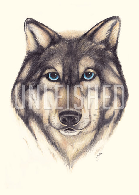 Wolf pencil illustration print (A3)