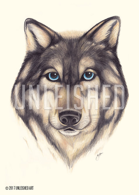 Wolf pencil illustration print (A3)