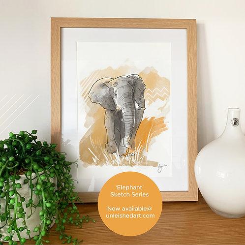 African Elephant - sketch series