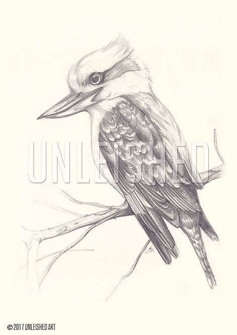 Kookaburra lead pencil illustration print (A3)