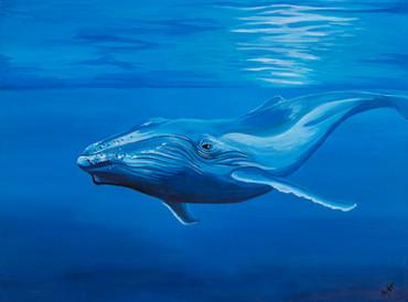 humpback-sm.jpg