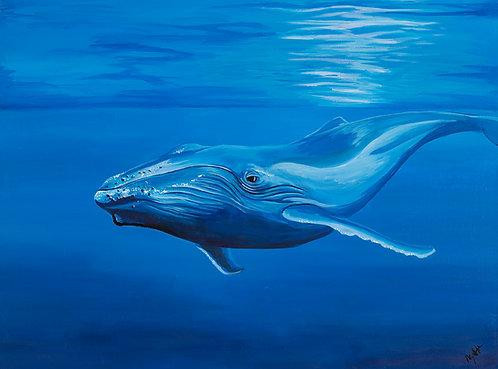 Humpback Whale (610mm x 455mm)
