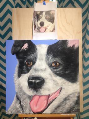 Blue Heeler - Canvas Painting