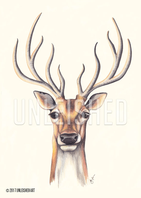 Stag pencil illustration print (A3)