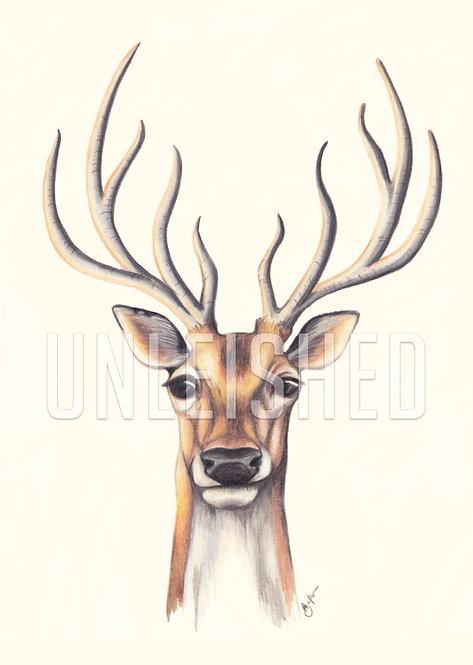Stag pencil illustration print (A3)