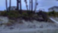 Screen Shot 2019-01-03 at 11_29_45 AM_pn