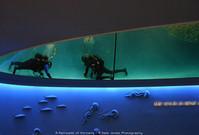 Monterey Bay Aquarium 02, 2005