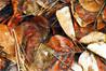Leaves - Spokane River 02-02-2012