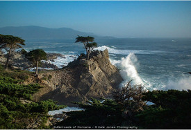 Lone Cypress - Pebble Beach, CA - Winter Storm 2005