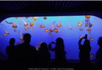 Monterey Bay Aquarium 03, 2005
