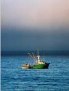 Monterey Squid Boats - 2005.jpg