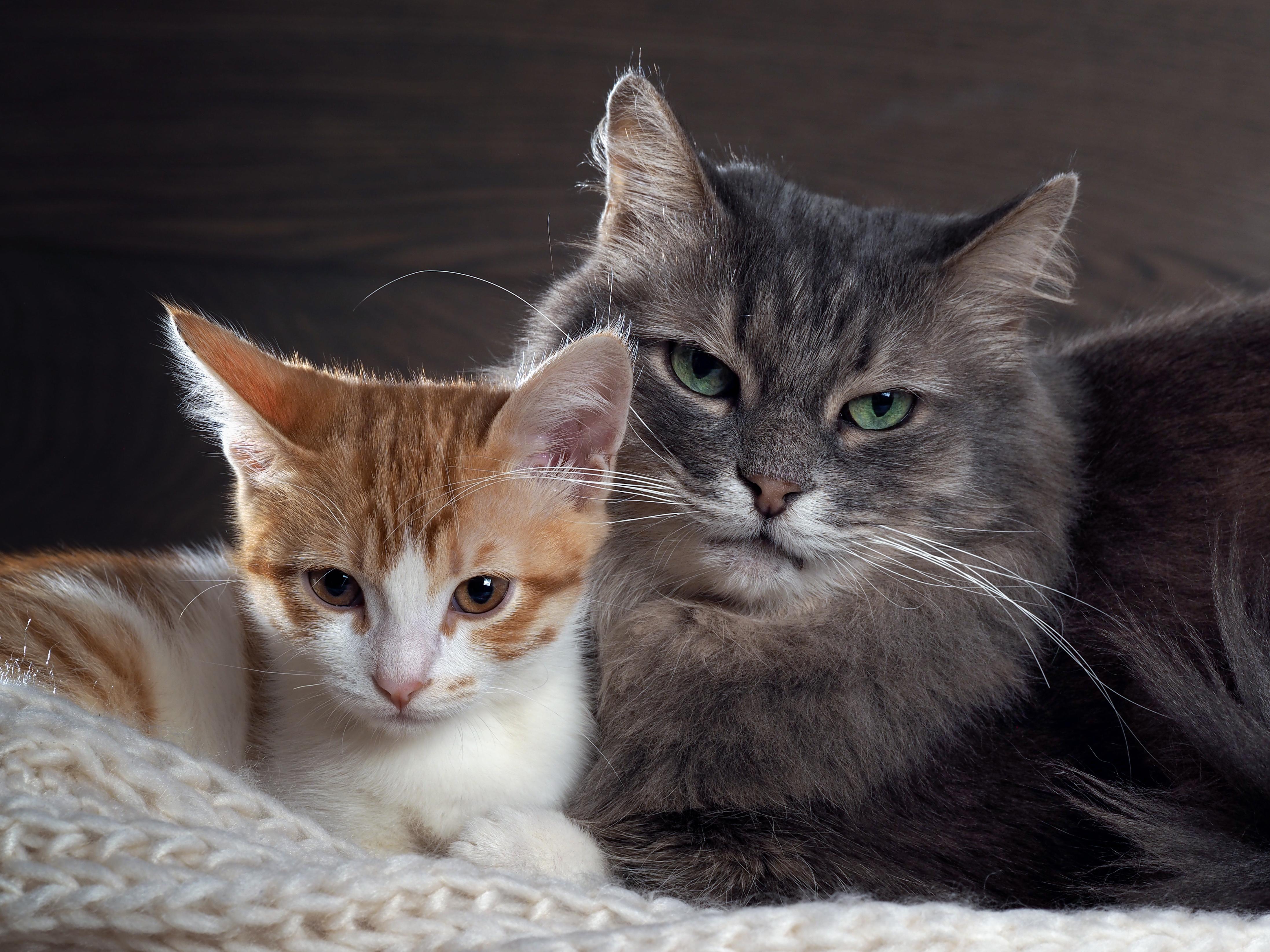 3edd40b7e4c 5 dicas para fazer o gatos pararem de brigar