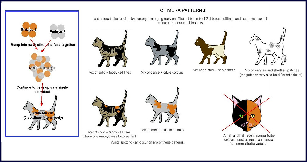 Chimera patterns