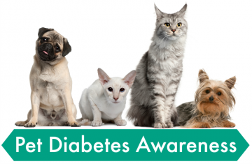 Pet Diabetes Awareness