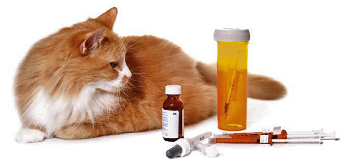 cat with medications