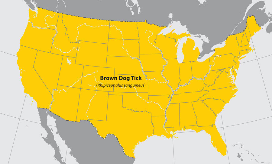 Map of brown dog tick geographical range
