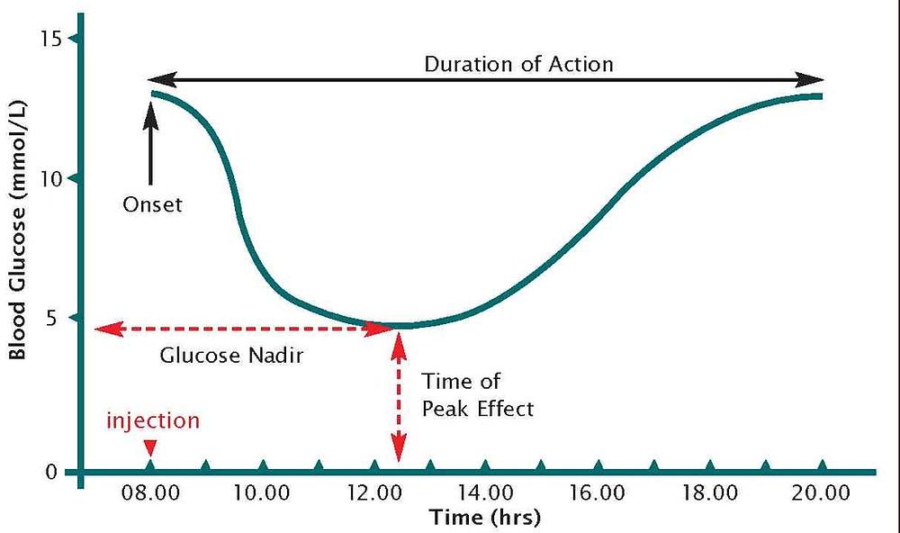 Blood Glucose Curve