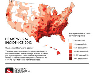 The Yucky Truth about Canine Heartworm Disease