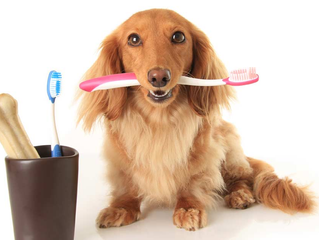 February is Veterinary Dental Health Month!
