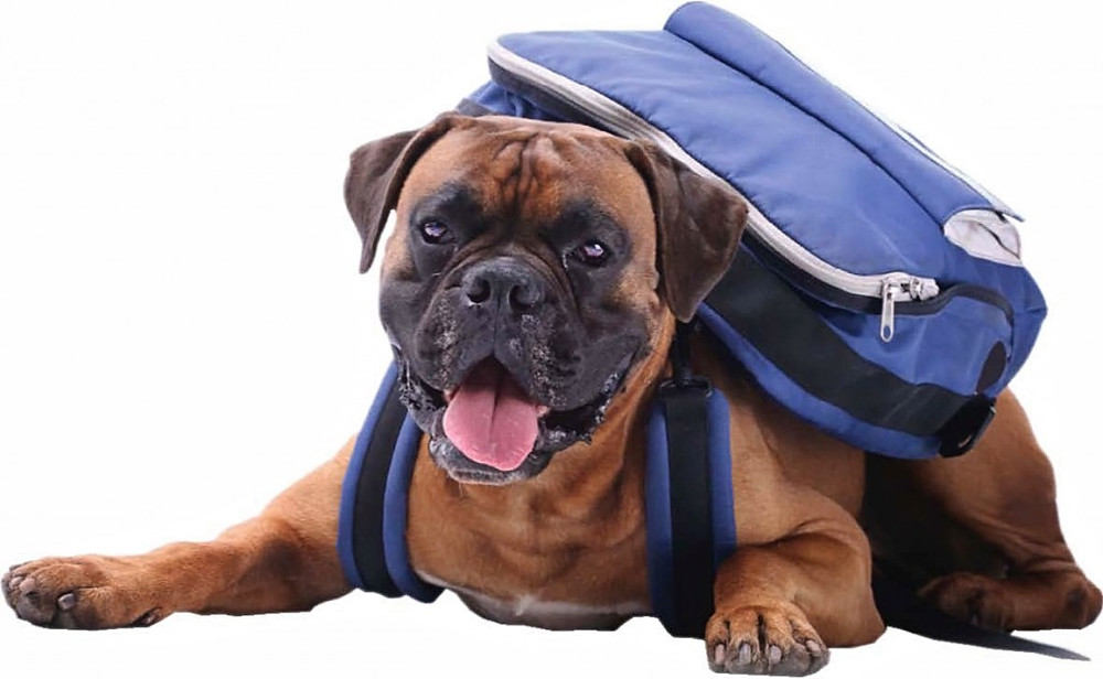 Dog with a backpack