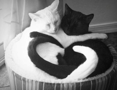 Black & White cats make heart