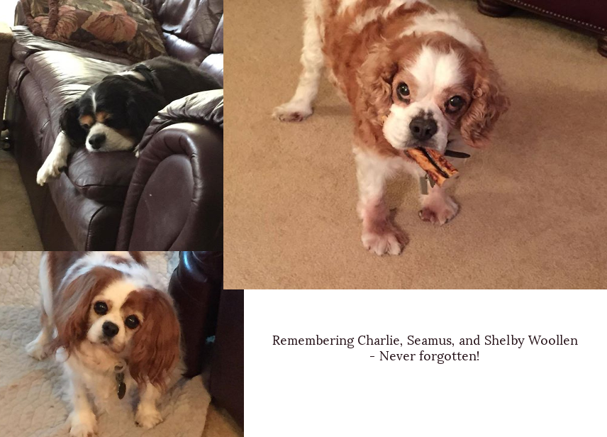 Charlie, Seamus, and Shelby Woollen