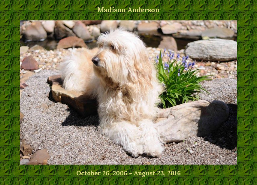 Madison Anderson