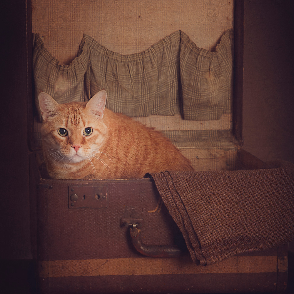 Truman, the clinic cat