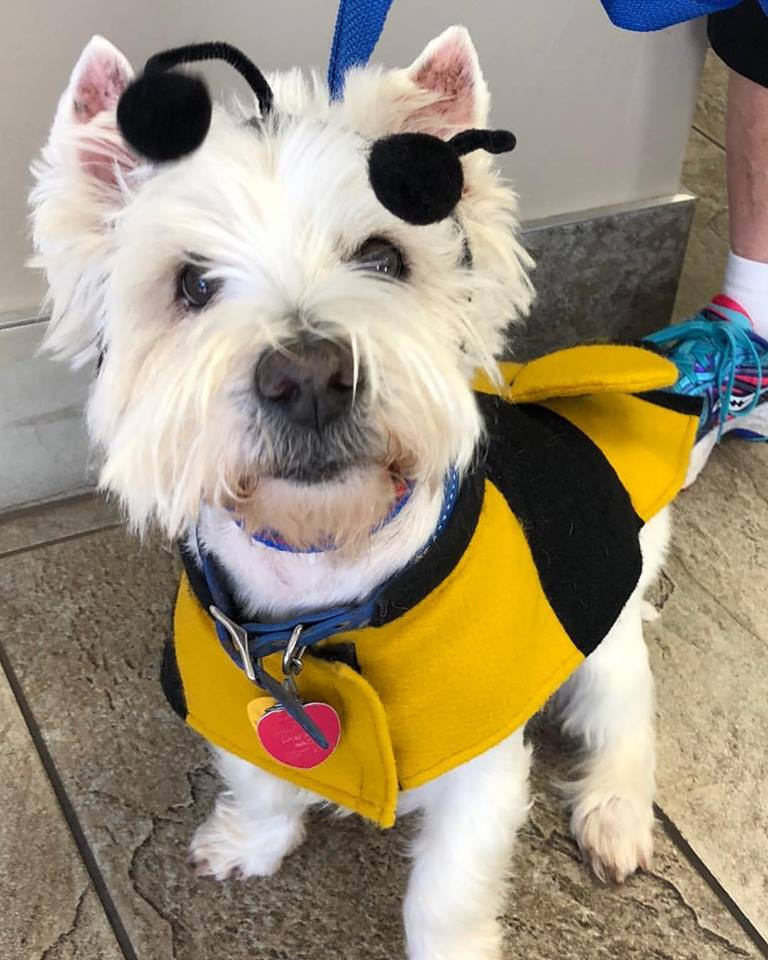 Rudy dressed as a bumble bee