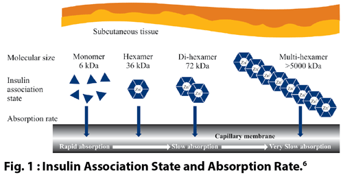 insulin association state and absorption rate