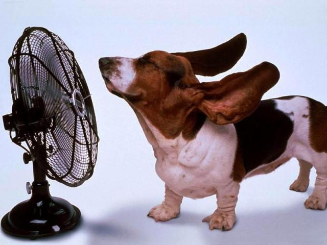Bassent Hound with Fan