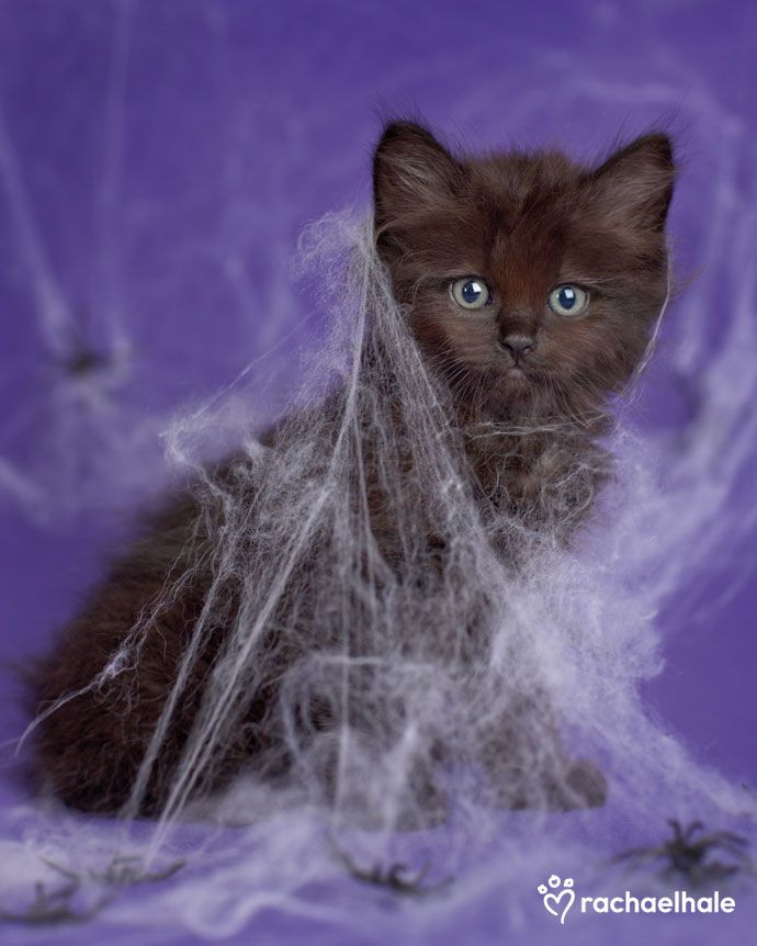 Cat in cobwebs
