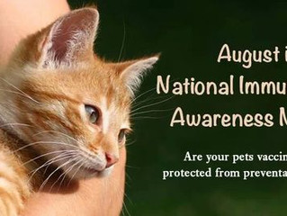 Immunization Awareness Month: Feline Vaccines