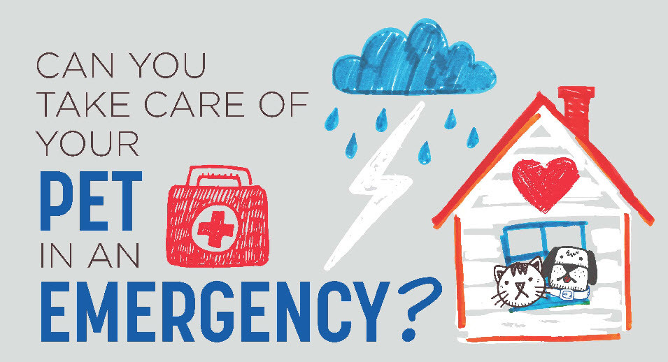 Can you take care of your pet in an emergency