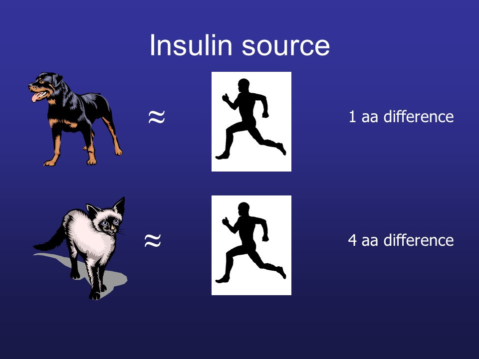 difference in insulin sources between cats, dogs, and humans