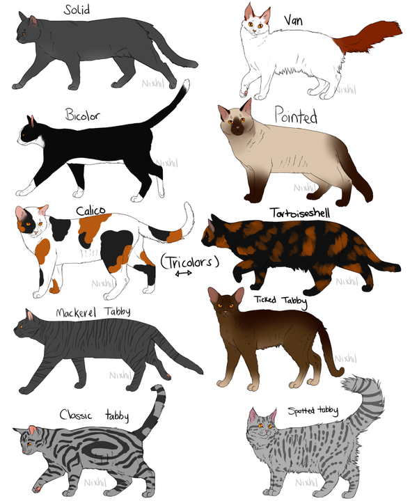 Coat markings on cats