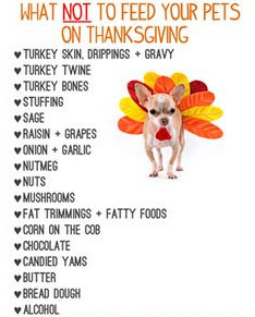 Foods not to feed your pet