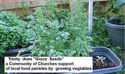 Trinity Grace Seeds2