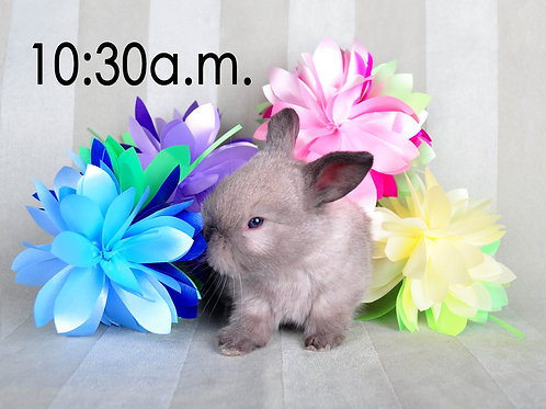 BUNNY EXPERIENCE - Saturday, April 3 @ 10:30 AM CT