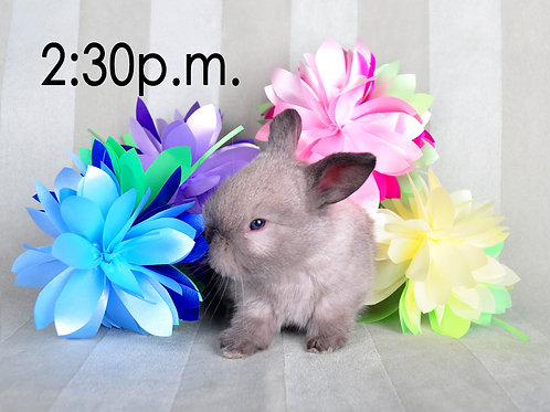 BUNNY EXPERIENCE - Saturday, April 3 @ 2:30 PM CT