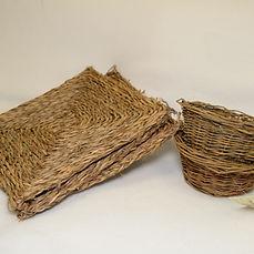 willowgrass.JPG