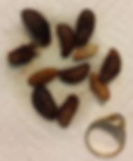 cuterebra next to size 7 ring.jpg