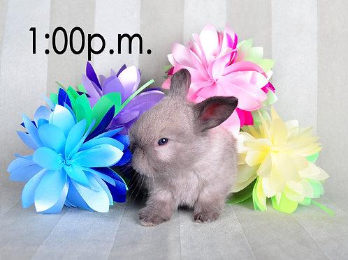 BUNNY EXPERIENCE - Saturday, April 3 @ 1:00 PM CT
