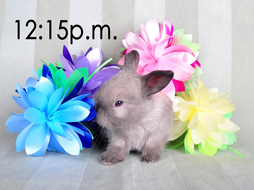 BUNNY EXPERIENCE - Saturday, April 3 @ 12:15 PM CT