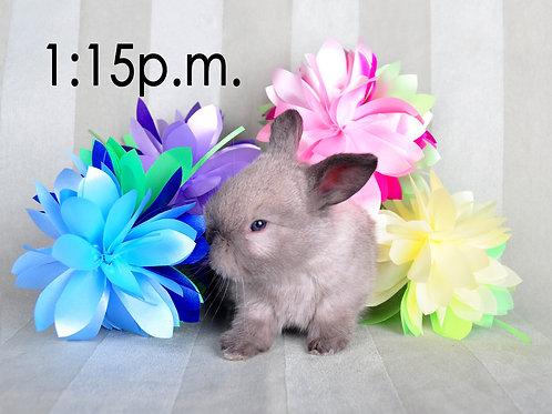 BUNNY EXPERIENCE - Saturday, April 3 @ 1:15 PM CT