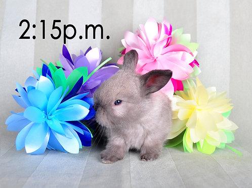 BUNNY EXPERIENCE - Saturday, April 3 @ 2:15 PM CT